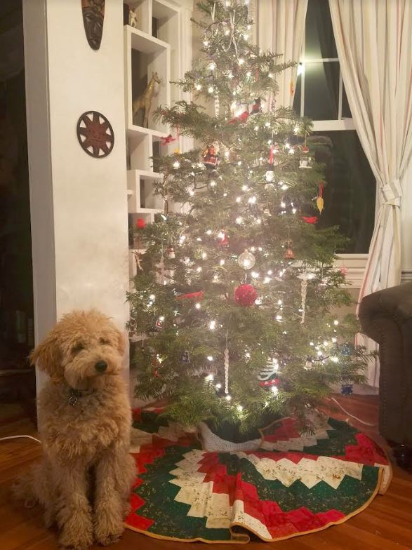toby goldendoodle christmas.JPG